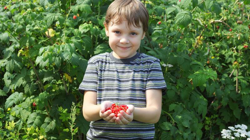 Boy with cupped hands holding berries