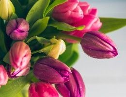 Fresh tulips ready for delivery